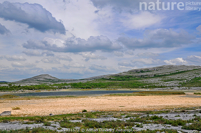Turlough / seasonal lake starting to dry out in summer. The Burren, County Clare, Ireland, June 2010  ,  COASTS,EIRE,EUROPE,LAKE,LANDSCAPES,LIMESTONE,POND,WATER,WETLANDS  ,  Adrian Davies