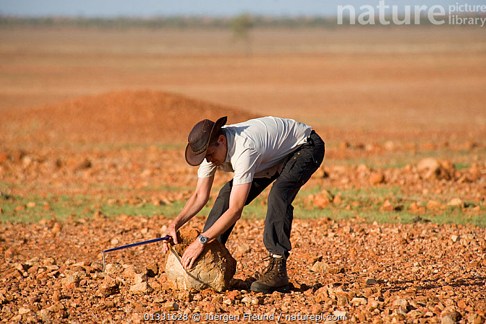 Researcher Guido Westhoff turning rocks in the desert looking for snakes taking shelter underground. Queensland, Australia, February 2008  ,  AUSTRALASIA,AUSTRALIA,DESERTS,HUNTING,MEN,PEOPLE,RESEARCH,ROCKS,SCIENCE,scientist,scientists,SNAKES  ,  Jurgen Freund