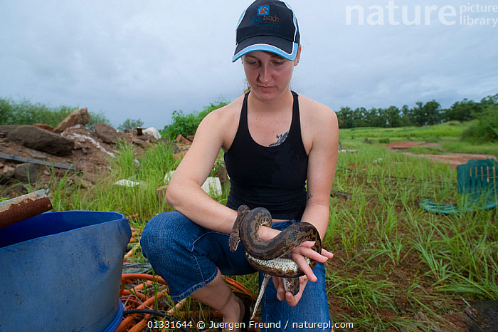 Snake breeder Lauren Collings with a Spotted python (Antaresia maculosa) in a trash dump site.  Queensland, Australia, February 2008  ,  AUSTRALASIA, AUSTRALIA, holding, PEOPLE, PYTHONS, REPTILES, RESEARCH, rubbish, SCIENCE, scientist, scientists, SNAKES, tip, VERTEBRATES, waste, WOMEN  ,  Jurgen Freund