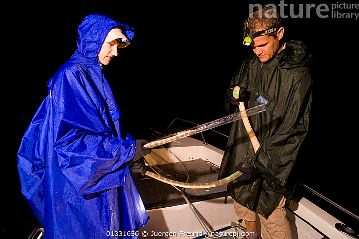 Researchers Guido and Katja Westhoff prepare a sea snake for skin sampling. Guido will take a positive print from the skin using a polymer, then use an electron microscope to discover whether sea snakes have specific skin ultrastructures to enhance swimming efficiency (similar to shark skin). Queensland, Australia, February 2008  ,  AUSTRALASIA,AUSTRALIA,BOATS,MEN,NIGHT,PEOPLE,RESEARCH,SCIENCE,scientist,scientists,seasnakes,SNAKES,WOMEN,,Skill, Efficiency,  ,  Jurgen Freund