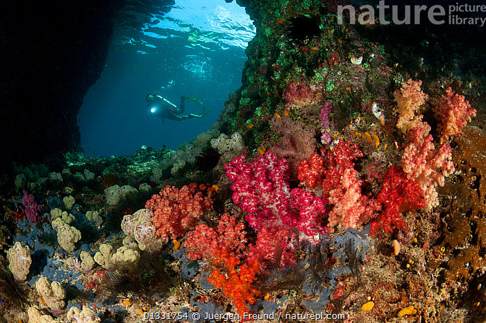 Diver navigating a swim-through at dive site called Boo with colourful corals in the foreground. Misool, Raja Ampat, West Papua, Indonesia, January 2010  ,  ASIA,COASTAL WATERS,COLOURFUL,coral triangle,CORAL REEFS,CORALS,divers,DIVING,holes,INDONESIA,INDO PACIFIC,Irian Jaya,MARINE,PEOPLE,scuba,SOUTH EAST ASIA,submission,SWIMMING,TROPICAL,UNDERWATER,,SOUTH-EAST-ASIA,NEW-GUINEA  ,  Jurgen Freund