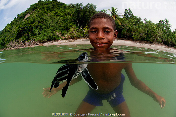 Split-level shot of Leatherback sea turtle (Dermochelys coriacea) with West Papuan boy in the water. Warmamedi beach, Bird's Head Peninsula, West Papua, Indonesia, July 2009  ,  BABIES,BEACHES,Boy,boys,CHELONIA,CHILDREN,COASTAL WATERS,COASTS,coral triangle,ENDANGERED,INDONESIA,INDO PACIFIC,Irian Jaya,MARINE,PEOPLE,playing,REPTILES,SEA TURTLES,SMALL,SOUTH EAST ASIA,SPLIT LEVEL,SWIMMING,TROPICAL,TURTLES,,SOUTH-EAST-ASIA,Asia,NEW-GUINEA,SIZE  ,  Jurgen Freund