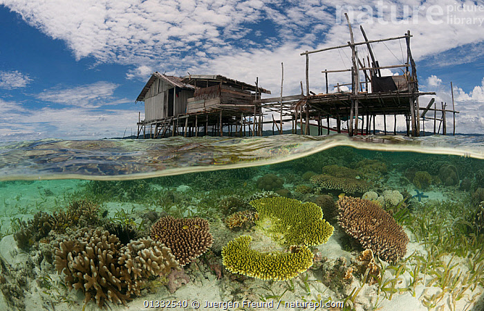 Split-level shot of a shallow coral reef and house on stilts. North Raja Ampat, West Papua, Indonesia, February 2010, architecture,ASIA,BUILDINGS,catalogue4G,Coral,coral triangle,CORAL REEFS,CORALS,GROWTH,HOMES,house on stilts,housing,INDONESIA,INDO PACIFIC,Irian Jaya,low angle view,MARINE,nature,Nobody,Raja Ampat,reef,sea,Shallow,SOUTH EAST ASIA,split level,SPLIT LEVEL,TRADITIONAL,TROPICAL,water level,WEST PAPUA,WWF,Concepts,SOUTH-EAST-ASIA,NEW-GUINEA, Jurgen Freund