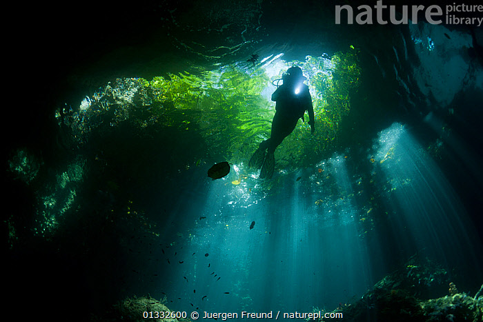 Light streaming into a shallow cave in a dive site called The Passage, with a diver swimming up towards the foliage visible above. North Raja Ampat, West Papua, Indonesia, February 2010. Model released., ASIA,catalogue4G,cave,CAVES,COASTAL WATERS,coral triangle,CORAL REEFS,dive site,diver,divers,DIVING,exploration,foliage,full length,INDONESIA,INDO PACIFIC,Irian Jaya,LEAVES,lit up,low angle view,magical,MARINE,mystery,nature,one person,PEOPLE,Raja Ampat,scuba,SILHOUETTES,SOUTH EAST ASIA,sunlight,The Passage,torch,torchlight,TROPICAL,UNDERWATER,unrecognisable person,WEST PAPUA,wetsuit,WILDLIFE,WWF,SOUTH-EAST-ASIA,NEW-GUINEA,Wonder,Spectacular,,,Divine,, Jurgen Freund