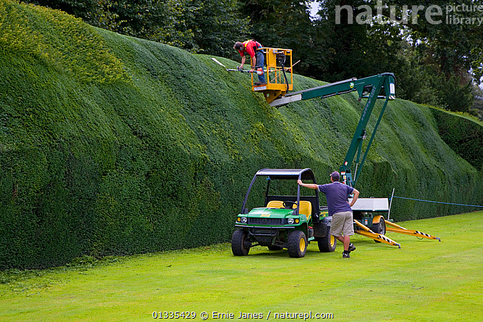 Modern methods used to trim a 15th Century Yew Hedge (Taxus baccata) at Blickling Hall, Norfolk, UK  ,  EUROPE,EVERGREEN,GARDENING,GARDENS,HEDGES,HISTORIC,MACHINERY,MEN,OUTDOORS,PEOPLE,UK,United Kingdom  ,  Ernie Janes