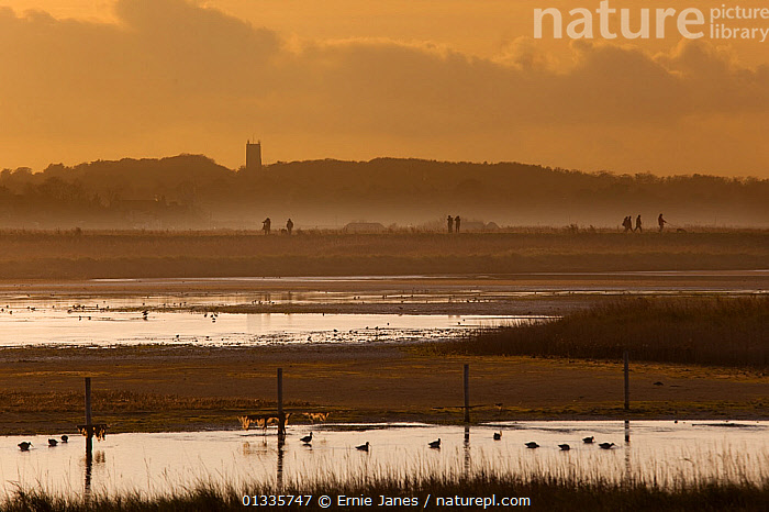 Cley nature reserve on an Autumn evening with silhouette of visitors walking along dyke and waders and ducks on water, Norfolk, UK, November, BIRDS,COASTS,DUCKS,ENGLAND,EUROPE,LANDSCAPES,MARSHES,PEOPLE,RESERVE,SALTMARSHES,TOURISM,UK,WADERS,WATER,Wetlands,United Kingdom, Ernie Janes
