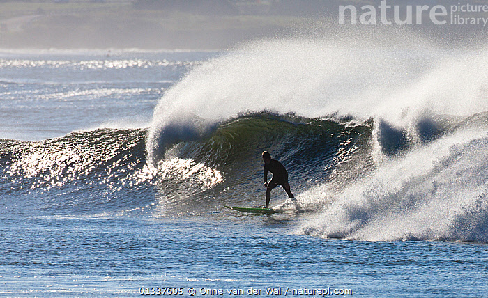 Surfer making the most of waves off the coast of Newport as Hurricane Igor passes Rhode Island, USA, September 2010.  ,  EXTREME,NORTH AMERICA,PEOPLE,SPORTS,SPRAY,SURFING,USA,WATERSPORTS,WAVES  ,  Onne van der Wal