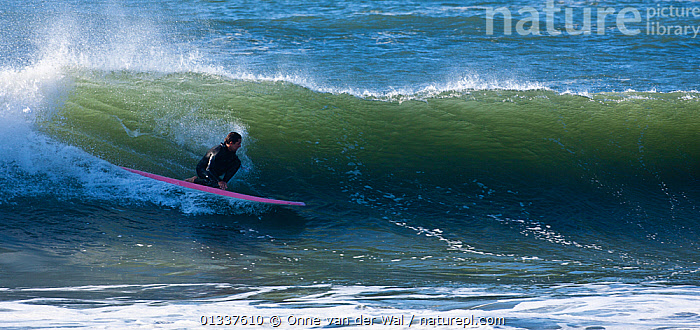 Surfer making the most of waves off the coast of Newport as Hurricane Igor passes Rhode Island, USA, September 2010.  ,  EXTREME,NORTH AMERICA,PANORAMIC,PEOPLE,SPORTS,SPRAY,SURFING,USA,WATERSPORTS,WAVES  ,  Onne van der Wal