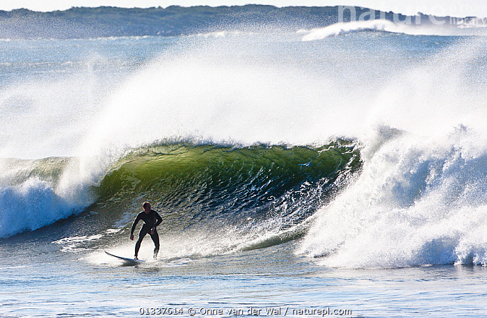 Surfer in impressive surf off the coast of Newport as Hurricane Igor passes Rhode Island, USA, September 2010.  ,  BREAKING,COASTS,EXTREME,MAN,NORTH AMERICA,PEOPLE,SPORTS,SPRAY,SURFING,USA,WATERSPORTS,WAVES,WEATHER  ,  Onne van der Wal
