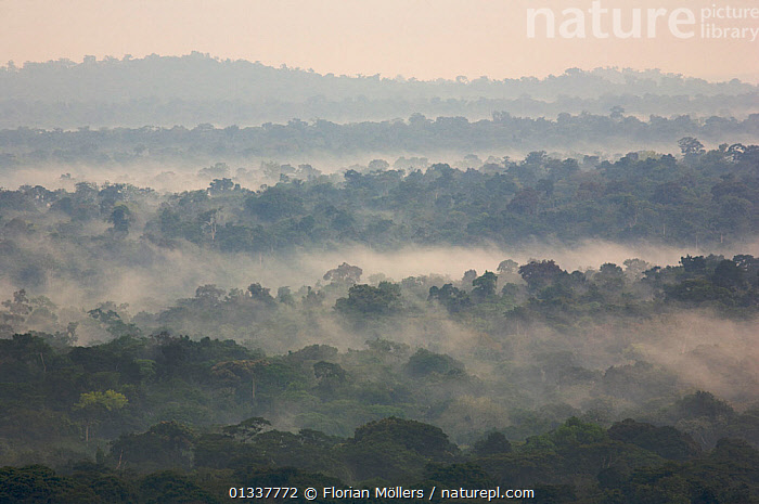 Rainforest of Budongo Forest Reserve and logged areas on both sides of the Royal Mile seen from Nyabyeya Hill at a cloudy sunrise. Budongo Forest Reserve, Masindi, Uganda, Africa. December 2006  ,  CANOPY,DAWN,EAST AFRICA,HIGH ANGLE SHOT,LANDSCAPES,MIST,RESERVE,SUNRISE,TROPICAL RAINFOREST  ,  Florian Möllers