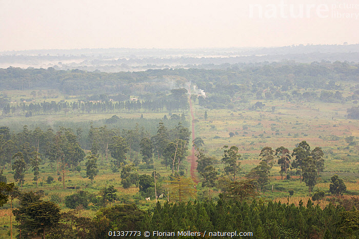 Aerial view of rainforest of Budongo Forest Reserve and logged areas on both sides of the Royal Mile seen from Nyabyeya Hill at a cloudy sunrise. Budongo Forest Reserve, Masindi, Uganda, Africa. December 2006  ,  EAST AFRICA,HIGH ANGLE SHOT,LANDSCAPES,RESERVE,ROADS,TROPICAL RAINFOREST  ,  Florian Möllers