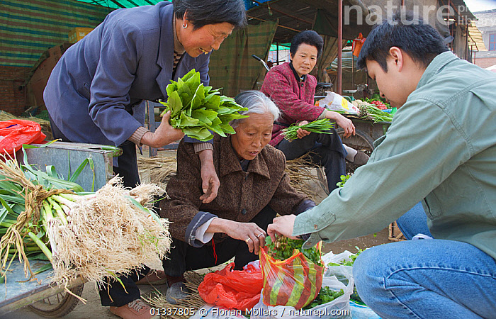Chinese buying fresh vegetables and herbs from women at market in Zhouzhi town, Qinling Mountains, Shaanxi, China, March 2006  ,  ASIA,CHINA,CITIES,ELDERLY WOMAN,MEN,OUTDOORS,PEOPLE,TRADE,VEGETABLES,WOMEN  ,  Florian Möllers