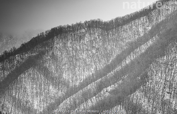Patterns of leafless trees in winter on steep slopes in Zhouzhi Nature Reserve, Qinling Mountains, Shaanxi, China, April 2006  ,  AERIALS,ASIA,BACKGROUNDS,CHINA,LANDSCAPES,RESERVE,SNOW,TREES,WOODLANDS,PLANTS  ,  Florian Möllers