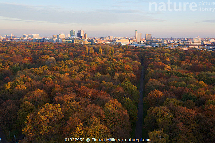 Aerial view from Siegessaeule of the Tiergarten Park and city centre, Berlin, Germany. November 2009  ,  AERIALS,BUILDINGS,CITIES,EUROPE,GERMANY,LANDSCAPES,parkland,Parks,TREES,WOODLANDS,GERMANY  ,  Florian Möllers