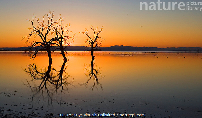 Salton Sea sunset, Southern California, USA.  ,  AWE,BEAUTY,CA,CALIFORNIA,CONTROVERSIES,CONTROVERSY,CORNELL,DESTINATION,ENVIRONMENT,FRESHNESS,IDYLLIC,ISSUE,ISSUES,JOHN,LAKE,LAKES,LAND,LANDSCAPES,MAJESTIC,MOOD,MYSTICAL,NATURAL,NORTH AMERICA,PEACEFUL,PERFECTION,PURE,REFLECT,REFLECTION,REFLECTIONS,RELAXATION,SALINE,SALTON,SEA,SKY,SOUTHERN,SUNRISE,SUNRISES,SUNSET,SUNSETS,TRANQUIL,TRAVEL,TWILIGHT,USA,VACATION  ,  Visuals Unlimited