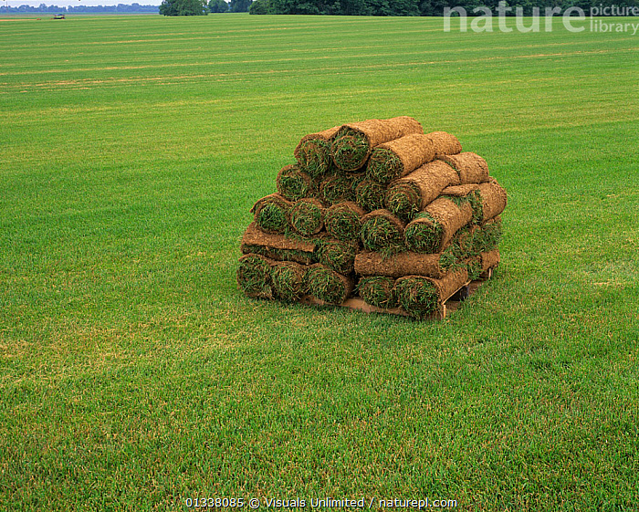 Rolls of harvested sod ready for shipping, Oldham County, Kentucky, USA.  ,  79754748,ADAM,AGRICULTURE,FARM,FARMING,FARMS,GRASS,GRASSES,HARVEST,HARVESTS,JONES,LAWN,NORTH AMERICA,ONE,PILE,SOD,TURF ,USA,Plants  ,  Visuals Unlimited