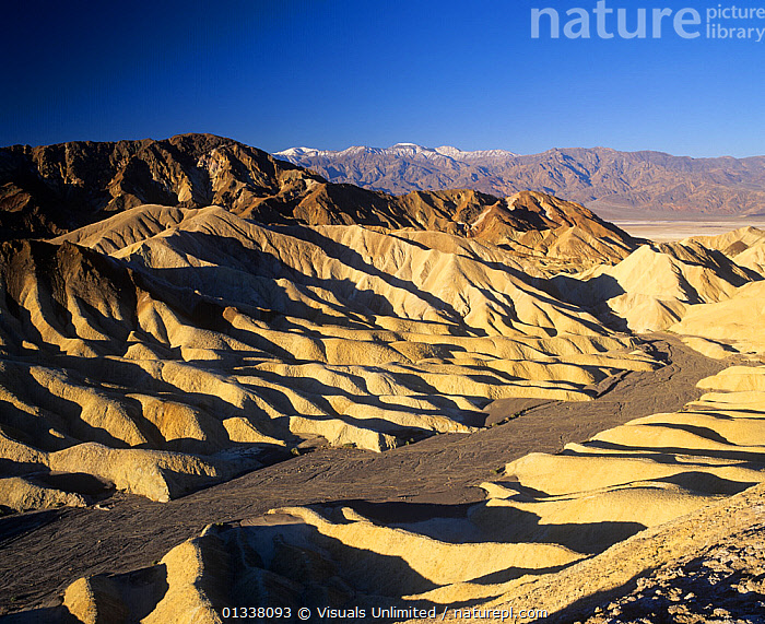View of Zabriskie Point with Telescope Peak, 11,049 feet, in the distance in the Panamint Mountains, Mojave Desert, Death Valley National Park, California, USA.  ,  79754822,ARID,ARIDITY,CA,CALIFORNIA,DEATH,DESERT,DESERTS,DRY,EROSION,GEOLOGY,LANDSCAPES,MOJAVE,MOUNTAINS,NATIONAL,NORTH AMERICA,PANAMINT,PARK,PEAK,POINT,SOIL,TELESCOPE,USA,VALLEY,WASH,WASHES,ZABRISKIE  ,  Visuals Unlimited