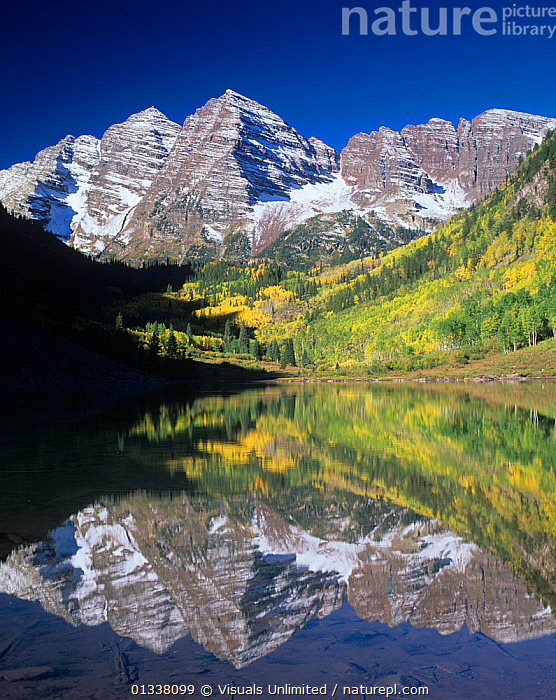Maroon Bells reflected on Maroon Lake, White River National Forest, Colorado, USA.  ,  79754696,ADAM,BELLS,COLORADO,FOREST,FORESTS,GLACIATION,JONES,LAKE,LAKES,LANDSCAPES,LAYER,LAYERS,MAROON,MOUNTAIN,MOUNTAINS,NATIONAL,NORTH AMERICA,PEAK,PEAKS,REFLECTION,REFLECTIONS,RESERVE,RIVER,ROCK,ROCKY,STRATA,TILTED,TIMBERLINE,TIMBERLINES,TREELINE,TREELINES,USA,VERTICAL,WHITE  ,  Visuals Unlimited