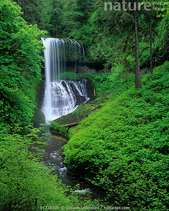 Middle North Falls, Silver Falls State Park, Oregon, USA.  ,  79754701,ADAM,CASCADE,CASCADING,EROSION,FALLS,FOREST,FORESTS,JONES,LANDSCAPES,MOUNTAINS,NORTH,NORTH AMERICA,NORTHWEST,OREGON,PACIFIC,PARK,PARKS,RESERVE,RIVERS,SILVER,STATE,USA,VERTICAL,WATER,WATERFALL,WATERFALLS,WATERS  ,  Visuals Unlimited