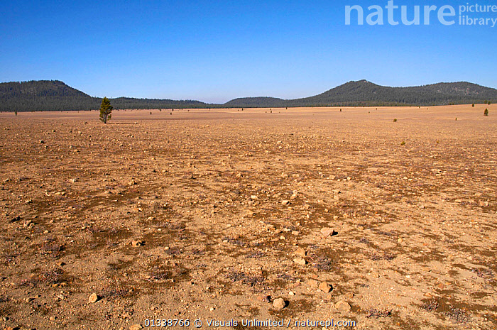 The Pumice Desert, formed when Mt. Mazama erupted 7700 years ago, consists of pumice and scoria over 30 m deep. Plants grow poorly due to mineral deficiencies. Crater Lake National Park, Oregon, USA.  ,  COLOR,CRATER,DESERT,DESERTS,GEOLOGY,IGNEOUS,JEAN,LAKE,LANDSCAPE,LANDSCAPES,MAZAMA,MINERALS,MT.,NATIONAL,OREGON,OUTDOORS,PARK,POLLOCK,PUMICE,ROBERT,ROCK,ROCKS,SCORIA,USA,North America  ,  Visuals Unlimited