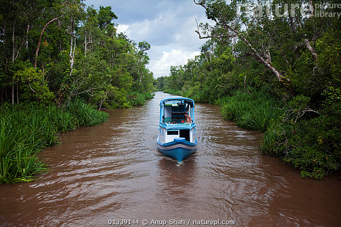 Kelotok boat carrying tourists along the Sekonyer River. Tanjung Puting National Park, Central Kalimantan, Borneo, Indonesia. June 2010.  ,  ASIA,BOATS,FORESTS,HABITAT,INDONESIA,NP,RESERVE,RIVERS,SOUTH EAST ASIA,TROPICAL RAINFOREST,VEHICLES,WATER,National Park  ,  Anup Shah