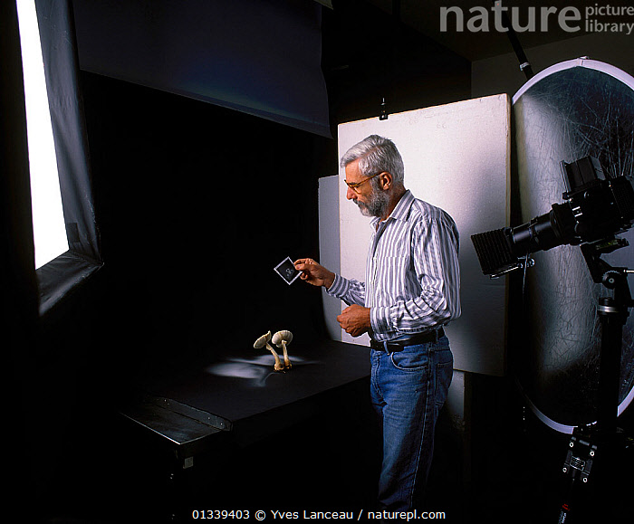 Photographer Yves Lanceau in his studio photographing spore dispersal pattern of False Death Cap fungus (Amanita citrina var. alba)  ,  AMANITACEAE,BEARD,CAMERA,FUNGI,FUNGUS,INDOORS,MAN,MIDDLE AGED,MUSHROOM,PATTERNS,PEOPLE,PHOTOGRAPHY,PORTRAITS,SPORES,SPORULATION,STUDIO,,Dispersal,  ,  Yves Lanceau