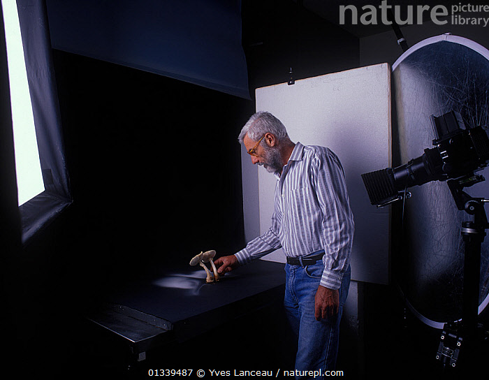 Yves Lanceau in his studio photographing spore dispersal pattern of False Death Cap fungus (Amanita citrina var. alba)  ,  BEARD,CAMERA,FUNGI,FUNGUS,INDOORS,MAN,MIDDLE AGED,PEOPLE,PHOTOGRAPHY,SPORES,SPORULATION,STUDIO,,Dispersal,  ,  Yves Lanceau