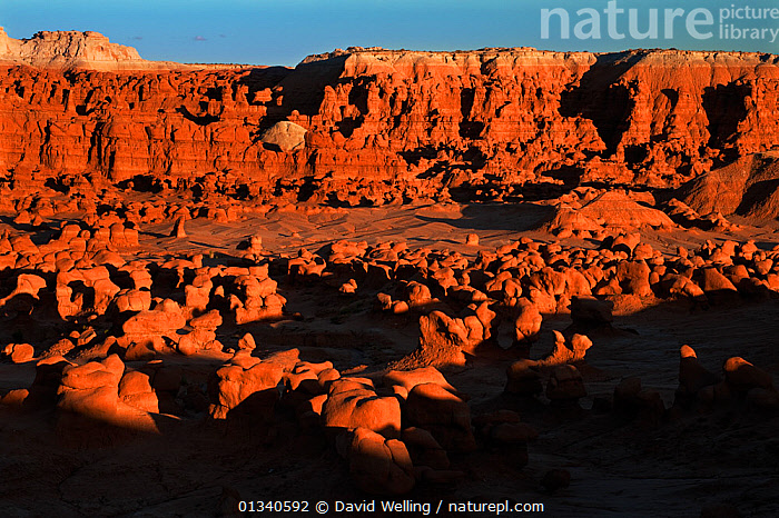 Hoodoo formations in the high desert of Goblin Valley State Park. Utah, USA, August., CLIFFS,DESERTS,EROSION,GEOLOGY,LANDSCAPES,NORTH AMERICA,NP,OCHRE,RESERVE,ROCK FORMATIONS,ROCKS,USA,UTAH,National Park, David Welling
