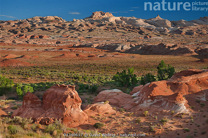 San Rafael Swell, near Goblin Valley, Utah, USA, August., DESERTS,GEOLOGY,LANDSCAPES,MOUNTAINS,NORTH AMERICA,NP,RESERVE,ROCK FORMATIONS,USA,UTAH,National Park, David Welling