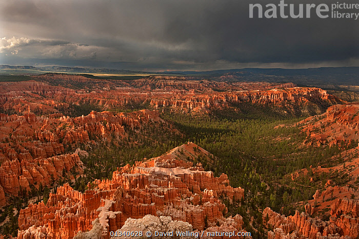 A thunderstorm drops heavy rain over the hoodoo sandstone formations. Bryce Canyon National Park, Utah, USA, August., ,ATMOSPHERIC,