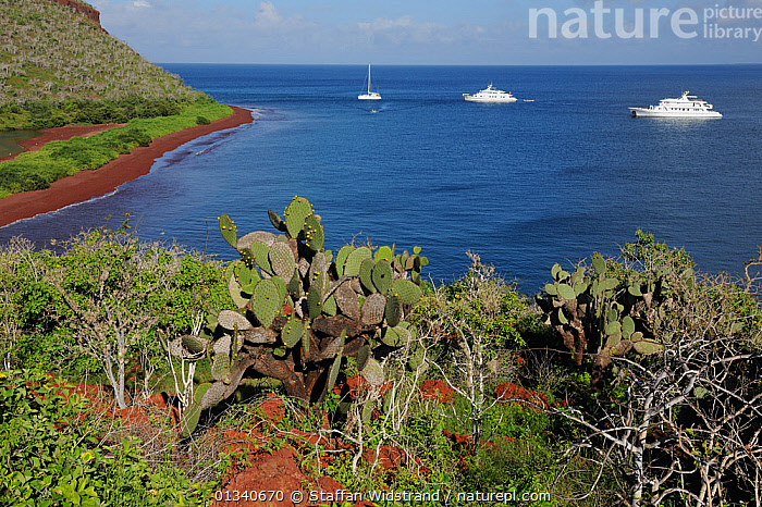 A view of a bay on Rabida Island with Prickly Pear (Opuntia vulgaris) in the foreground and three yachts. Galapagos, Ecuador, April., ANCHORAGES,BOATS,CACTI,COASTS,CRUISING,ECUADOR,GALAPAGOS,ISLANDS,LANDSCAPES,MIXED BOATS,MOTORBOATS,PACIFIC ISLANDS,SAILING BOATS,SEA,SEASCAPES,SOUTH AMERICA,Plants, Staffan Widstrand