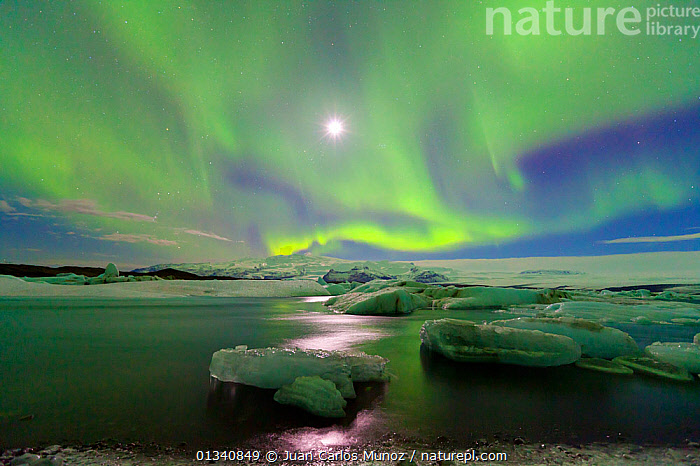 Northern lights (Aurora Borealis) and moon in sky above Jokulsarlon glacier lagoon. Southern Iceland, Europe, March 2011., ARCTIC,ARTY SHOTS,AURORA,BEAUTY IN NATURE,BOREAL,EUROPE,GREEN,ICE,ICELAND,LANDSCAPES,LIGHTS,MOON,NIGHT,PEACEFUL,SKIES,WATER, Juan Carlos Munoz