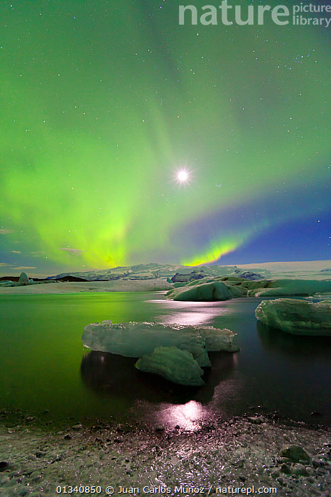 Northern lights (Aurora Borealis) and moon in sky above Jokulsarlon glacier lagoon. Southern Iceland, Europe, March 2011., ARCTIC,ARTY SHOTS,AURORA,BEAUTY IN NATURE,BOREAL,EUROPE,GREEN,ICE,ICELAND,LANDSCAPES,LIGHTS,MOON,NIGHT,PEACEFUL,SKIES,VERTICAL,WATER, Juan Carlos Munoz