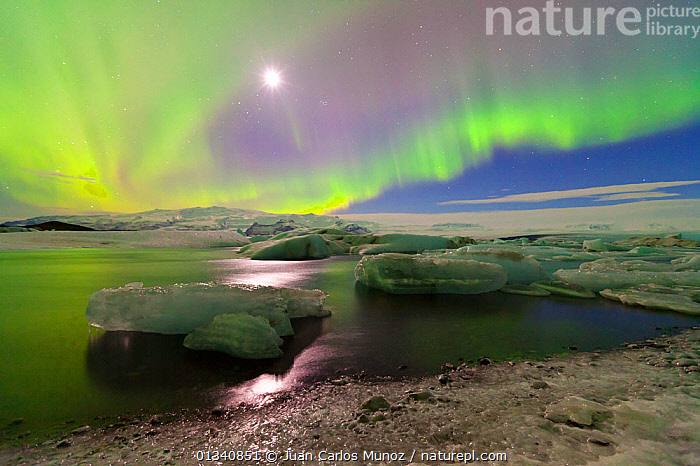 Northern lights (Aurora Borealis) and moon in sky above Jokulsarlon glacier lagoon. Southern Iceland, Europe, March 2011., ARCTIC,ARTY SHOTS,AURORA,BEAUTY IN NATURE,BOREAL,EUROPE,ICE,ICELAND,LANDSCAPES,LIGHTS,MOON,NIGHT,PEACEFUL,SKIES,WATER,core collection xtwox, Juan Carlos Munoz