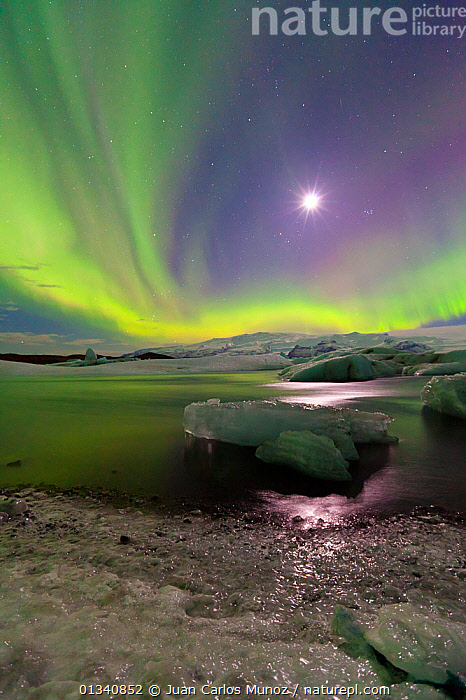 Northern lights (Aurora Borealis) and moon in sky above Jokulsarlon glacier lagoon. Southern Iceland, Europe, March 2011., ARCTIC,ARTY SHOTS,AURORA,BEAUTY IN NATURE,BOREAL,EUROPE,ICE,ICELAND,LANDSCAPES,LIGHTS,MOON,NIGHT,SKIES,VERTICAL,WATER,core collection xtwox, Juan Carlos Munoz