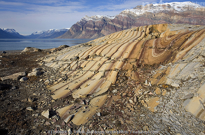 Glaciers have smoothed these folded sedimentary rocks, dated to the Cambrian and late pre-Cambrian. Segels�llskapets Fjord, northeast Greenland National Park, September 2008., EUROPE,GREENLAND,LANDSCAPES,MOUNTAINS,NORWAY,NP,ROCK FORMATIONS,ROCKS,STRATA,Scandinavia,National Park, Troels Jacobsen/Arcticphoto