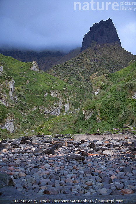 A small colony of Subantarctic Fur Seals (Arctocephalus tropicalis) on a beach. Quest Bay, Gough Island, South Atlantic Islands., ATLANTIC ISLANDS,BEACHES,CARNIVORES,CLIFFS,COASTS,COLONIES,FUR SEALS,LANDSCAPES,MAMMALS,MOUNTAINS,PINNIPEDS,VERTEBRATES,VERTICAL,Geology, Troels Jacobsen/Arcticphoto