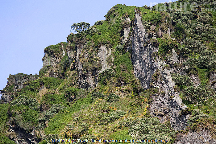 Softer rocks have eroded, leaving a volcanic dyke exposed on the hillside. Quest Bay, Gough Island South Atlantic Islands, March 2007., ATLANTIC ISLANDS,CLIFFS,GEOLOGY,LANDSCAPES,MOUNTAINS,ROCK FORMATIONS,ROCKS, Troels Jacobsen/Arcticphoto