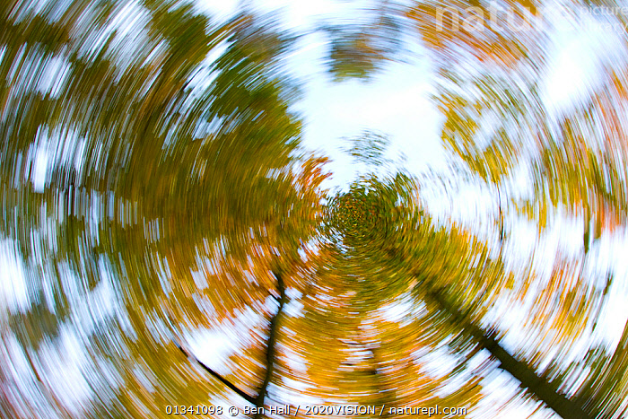 Abstract image looking up through woodland canopy, The National Forest, Central England, UK, November 2010, 2020VISION,ABSTRACT,BHA_ 02_01112010_0026,CIRCLE,DERBYSHIRE,ENGLAND,EUROPE,FORESTS,LEICESTERSHIRE,LOW ANGLE SHOT,RESERVE,STAFFORDSHIRE,SWIRLS,UK,WOODLANDS,United Kingdom, Ben Hall / 2020VISION