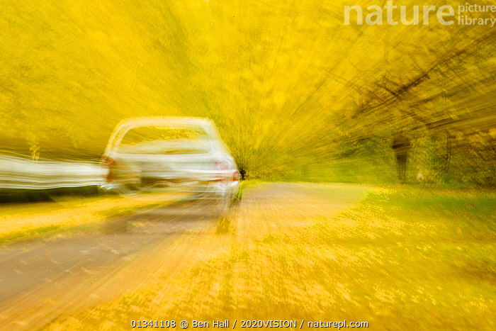 Car driving down avenue of mature Lime trees leading to Calke Abbey, The National Forest, Derbyshire, UK, November 2010, 2020VISION,ABSTRACT,AUTUMN,BHA_ 02_02112010_0041,BLURRED,CARS,DERBYSHIRE,ENGLAND,EUROPE,FORESTS,LEAVES,PERSPECTIVE,RESERVE,ROADS,TILIA,UK,VEHICLES,WOODLANDS,YELLOW,United Kingdom, Ben Hall / 2020VISION