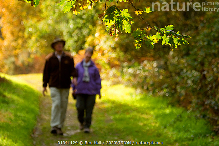 Couple walking down path through woodland, The National Forest, Central England, UK, November 2010, 2020VISION,AUTUMN,BHA_ 02_03112010_0070,DERBYSHIRE,ELDERLY,ENGLAND,EUROPE,FORESTS,LEICESTERSHIRE,LEISURE,MAN,OUTDOORS,PATHS,PEOPLE,RESERVE,STAFFORDSHIRE,TWO,UK,WALKING,WOMAN,WOODLANDS,United Kingdom, Ben Hall / 2020VISION