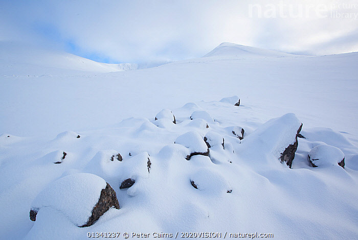 Winter landscape in Cairngorms' northern corries, Cairngorms NP, Scotland, UK, February 2010., 2020VISION,EUROPE,GRAMPIAN,LANDSCAPES,MOUNTAINS,NP,PCA_3_111110_01,SCOTLAND,SNOW,UK,WHITE,WINTER,National Park,United Kingdom, Peter Cairns / 2020VISION