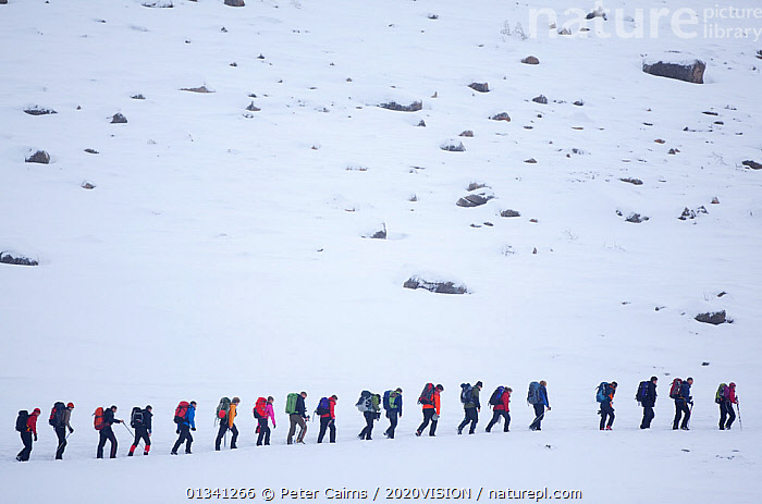 Line of mountain walkers in winter, Lochain Mountains, Cairngorms NP, Highlands, Scotland, UK, February 2010. 2020VISION Exhibition. 2020VISION Book Plate., 2020vision book plate,2020vision exhibition,ADVENTURE,cairngorms,CARRYING,exhibition,grampian,GROUPS,HIGH ANGLE,hikers,hiking,LEISURE,LINES,MOUNTAINS,National,outdoors,Park,pca_3_111110_31,PEOPLE,rows,rucksacks,SCOTLAND,SNOW,WALKING,WHITE,WINTER,Europe,UK,United Kingdom,2020cc, Peter Cairns / 2020VISION