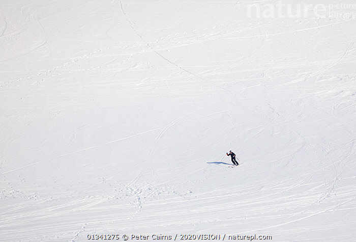 Lone skier, Cairngorms National Park, Highlands,  Scotland, UK, February 2010, 2020VISION,CAIRNGORMS,FREEDOM,HIGH ANGLE,MAN,MOUNTAINS,NATIONAL,ONE,OUTDOORS,PARK,PCA_3_111110_40,PEOPLE,SCOTLAND,SKIER,SKIING,SNOW,SPORT,UK,WHITE,WINTER,Europe,United Kingdom, Peter Cairns / 2020VISION