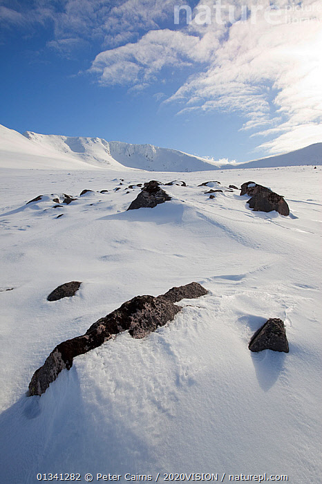Winter landscape looking into northern corries, Lochain, Cairngorms NP, Highlands, Scotland, UK, March 2010, 2020VISION,CAIRNGORMS,EUROPE,GRAMPIAN,ICE,LANDSCAPES,MOUNTAINS,NATIONAL,NP,PARK,PCA_3_111110_47,ROCKS,SCOTLAND,SNOW,UK,VERTICAL,WHITE,WINTER,National Park,United Kingdom, Peter Cairns / 2020VISION