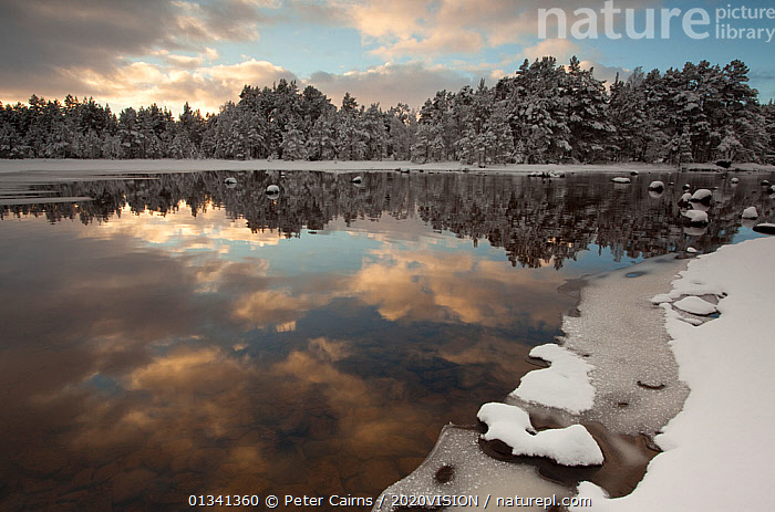 Loch Morlich in winter, Cairngorms NP, Highlands, Scotland, UK, December 2010, 2020VISION,CAIRNGORMS,EUROPE,FORESTS,ICE,LAKES,LANDSCAPES,NATIONAL,PARK,PCA_14_281210_25,REFLECTIONS,SCOTLAND,SNOW,UK,WATER,WINTER,United Kingdom, Peter Cairns / 2020VISION