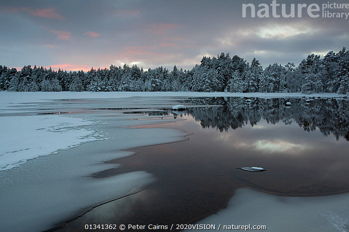 Loch Morlich partially frozen over in winter, Cairngorms NP, Highlands, Scotland, UK, December 2010, 2020VISION,CAIRNGORMS,EUROPE,FORESTS,ICE,LAKES,LANDSCAPES,NATIONAL,PARK,PCA_14_281210_29,SCOTLAND,SNOW,UK,WATER,WINTER,United Kingdom, Peter Cairns / 2020VISION