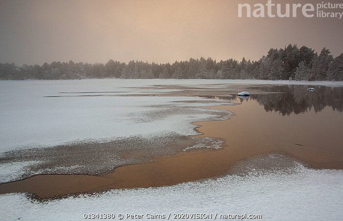 Loch Morlich in winter, Cairngorms NP, Highlands, Scotland, UK, December 2010, 2020VISION,CAIRNGORMS,EUROPE,FORESTS,ICE,LAKES,LANDSCAPES,NATIONAL,OVERCAST,PARK,PCA_14_281210_59,RESERVE,SCOTLAND,SNOW,UK,WATER,WINTER,United Kingdom, Peter Cairns / 2020VISION