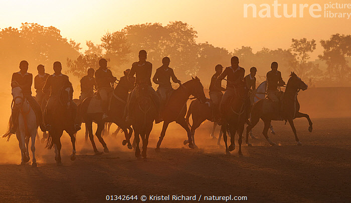 Young police riders training on horses at sunrise, Bhavnagar Police Station, Gujarat, India, January 2011  ,  Bhavnagar,catalogue4,DAWN,Evening,GROUPS,Gujarat,Horse,horseback,HORSES,india,INDIAN SUBCONTINENT,large group of animals,large group of people,MAMMALS,MEN,Morning,mounted,on the move,PEOPLE,PERISSODACTYLA,police,riding,SUNRISE,TRADITIONAL,VERTEBRATES,young adult,young men  ,  Kristel Richard