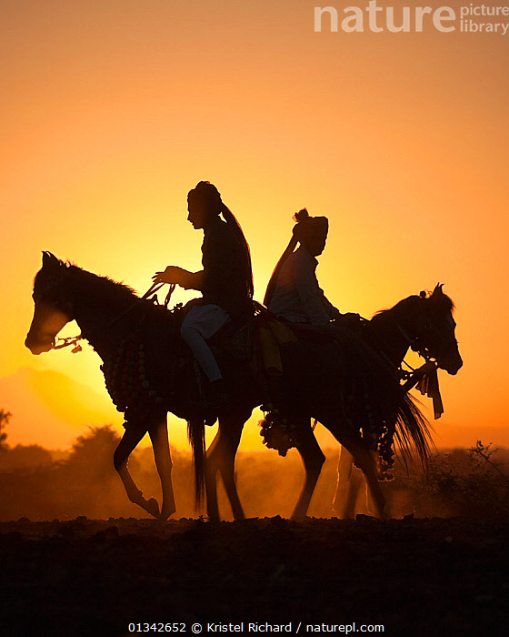 Silhouette of two traditionally dressed Indian riders, mounted on Kathiawari mares, backlit at sunset, in Gujarat, India, January 2011, Model released  ,  back to back,backlit,catalogue4,desert,dust,Evening,female animal,full length,Gujarat,Horse,horseback,HORSES,india,Indian,INDIAN SUBCONTINENT,Kathiwari,MAMMALS,mare,PERISSODACTYLA,riding,side view,SILHOUETTES,SUNSET,traditional clothing,Turban,two,two animals,two people,VERTEBRATES,VERTICAL,Equines  ,  Kristel Richard